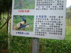 我們親眼見到 3 隻藍鵲(屬鴉科)模樣。同時,這裡也形成了:小動物>蛇>蛇鷹一串食物鏈~