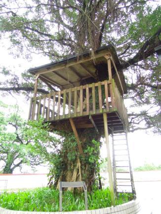 大坪國小最具特色的樹屋~