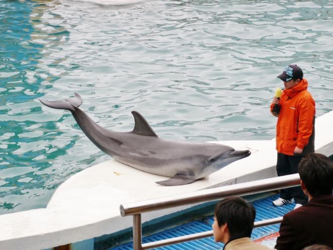 海豚劇場不僅具有育樂效果,還會介紹海豚、海獅的生理特徵,增進遊客對這些保育動物的了解,具有教育意義~